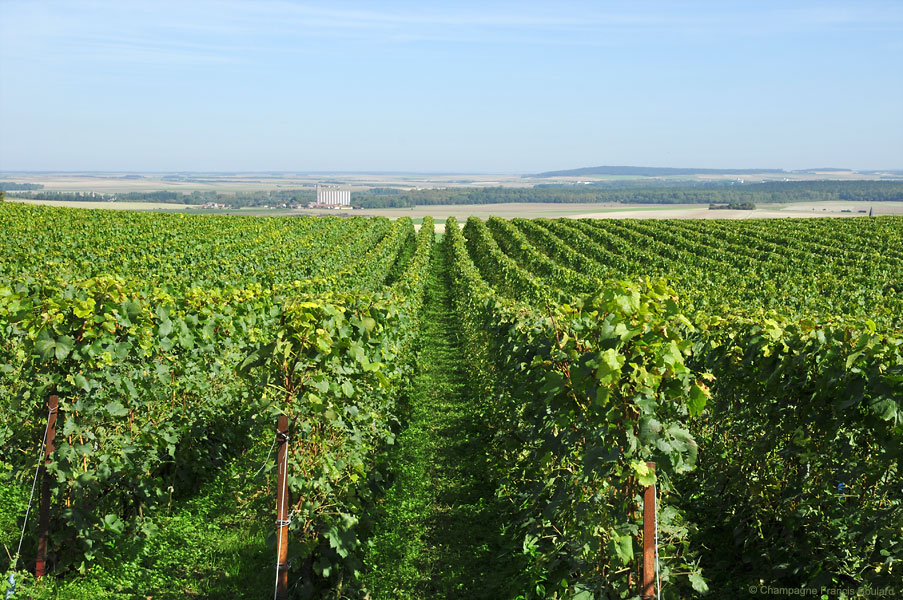 Vineyards at Cormicy