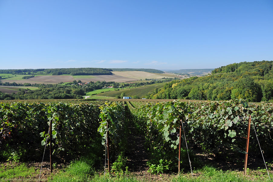 Vineyards at Paradis (Belval valley)